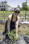 Woman weeding tomato plants and looking at camera