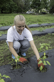 Young girl volunteer planting in the spring