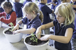 Young kids from school planting plants in pots