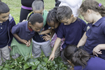 Young school children learning about plants and farming