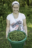 A woman with a basket full of just picked beans