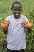 Boy holding four tomatoes that he just picked