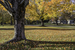 The Common in Petersham, MA