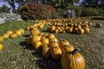 Pumpkins for sale at a farm