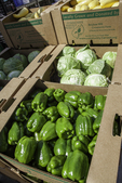 Peppers ready to be shipped to markey