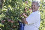 Man with a big smile picking apples