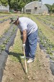 Man with hat weeding a garden