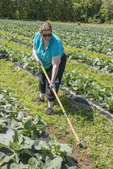 Woman weeding with a hoe