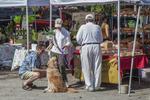 Farmer's Market in Great Barrington, MA