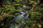 Mossy Brook on Mount Monadnock, NH