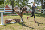 Woman training a miniature horse to jump