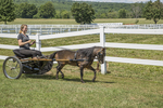 Woman driving a small cart pulled by a miniature horse.
