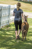 Woman walking with her miniature horse