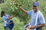 Smiling man picking apples