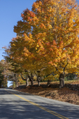 Colorful maple trees line the road in Princeton, MA