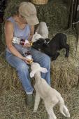 A farmer feeds her bottle fed lambs