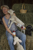 A farmer tries to feed her bottle fed lambs