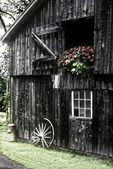 An old barn with red flowers in the barn door in Arlington, VT