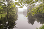 Foggy morning on the East Branch of the Swift River in Petersham, MA