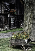 A wheel barrow full of flowers