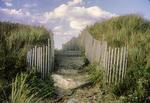 The dunes at Crane Beach