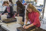 Young volunteers planting seeds for a farm coop