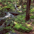 Mossy Brook in the Monadnock Region of New Hampshire