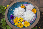 Flowers arranged in a bird bath