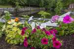 Flowers on the stone wall overlooking the Contocook River in Peterborough, NH