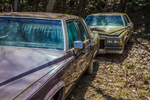 Old junked cadillacs - antiques
