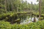 Wetland in Phillipston, MA