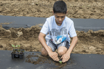 Young boy planting vegetables on a farm