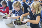 Young children planting vegetables in a pot