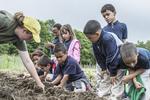 School children working in the garden, learning about gardening