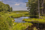 Thousand Acre swamp in Phillipston, MA (Skunk's Misery)