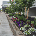 Garden planted in downtown Worcester, MA