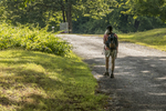 A hiker walks along an old dirt road in Dana at the Quabbin Reservoir