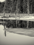 Ice on a pond in the Quabbin Reservoir, New Salem, MA