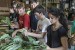 Young volunteers working at a farm that supplies vegetables to the Worcester, MA food banks