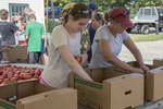 Volunteers packing vegetables in boxes to be delivered to food bamks