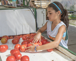 Tomatoes are being put into a washer by a young volunteer