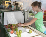 Peppers placed in the vegetable washer by a young volunteer