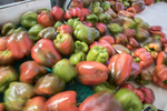 Peppers have just been washed and are ready for sorting and packing