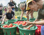 Farm volunteers with the tomatoes that they picked