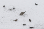 Birds feeding on a snowy winter day