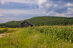 A tobacco barn next to a corn field in Sunderland, MA