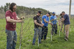 Volunteers removing buds from newly planted apple trees so the trees will be stronger