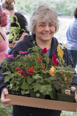 Woman with a box load of flowers just purchased at a plant sale