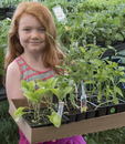 A little girl with a box full of plants