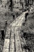 Boardwalk through a wetland in Princeton, MA